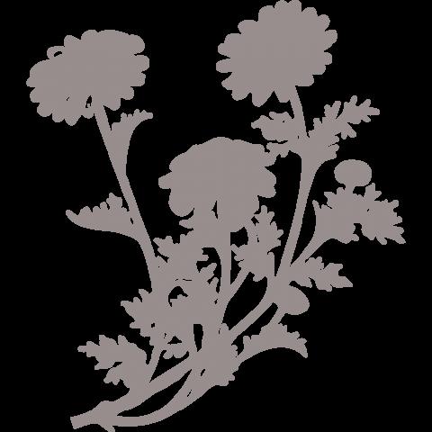 Цветок ромашки