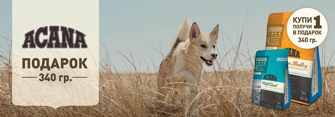 Акционные корма Acana для собак