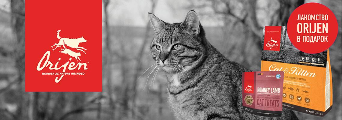 Акционные корма Orijen для кошек