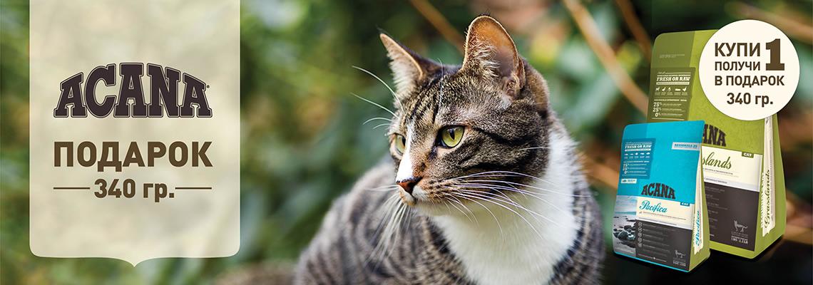 Акция на корм для кошек Акана