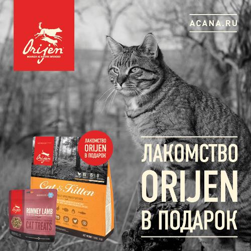 Акция на корм для кошек Orijen