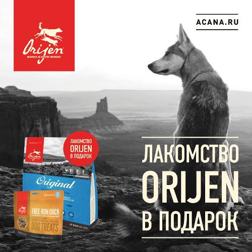 Акция на корм для собак Orijen
