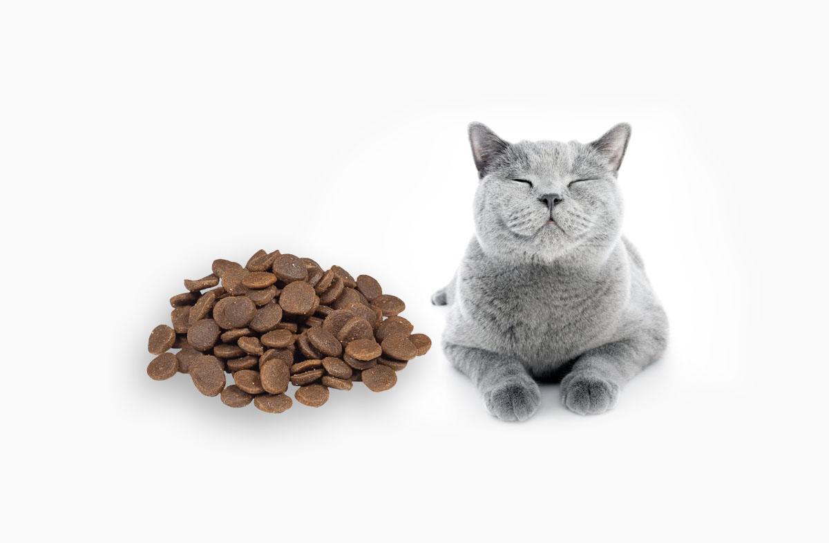60 грамм сухого корма — это сколько