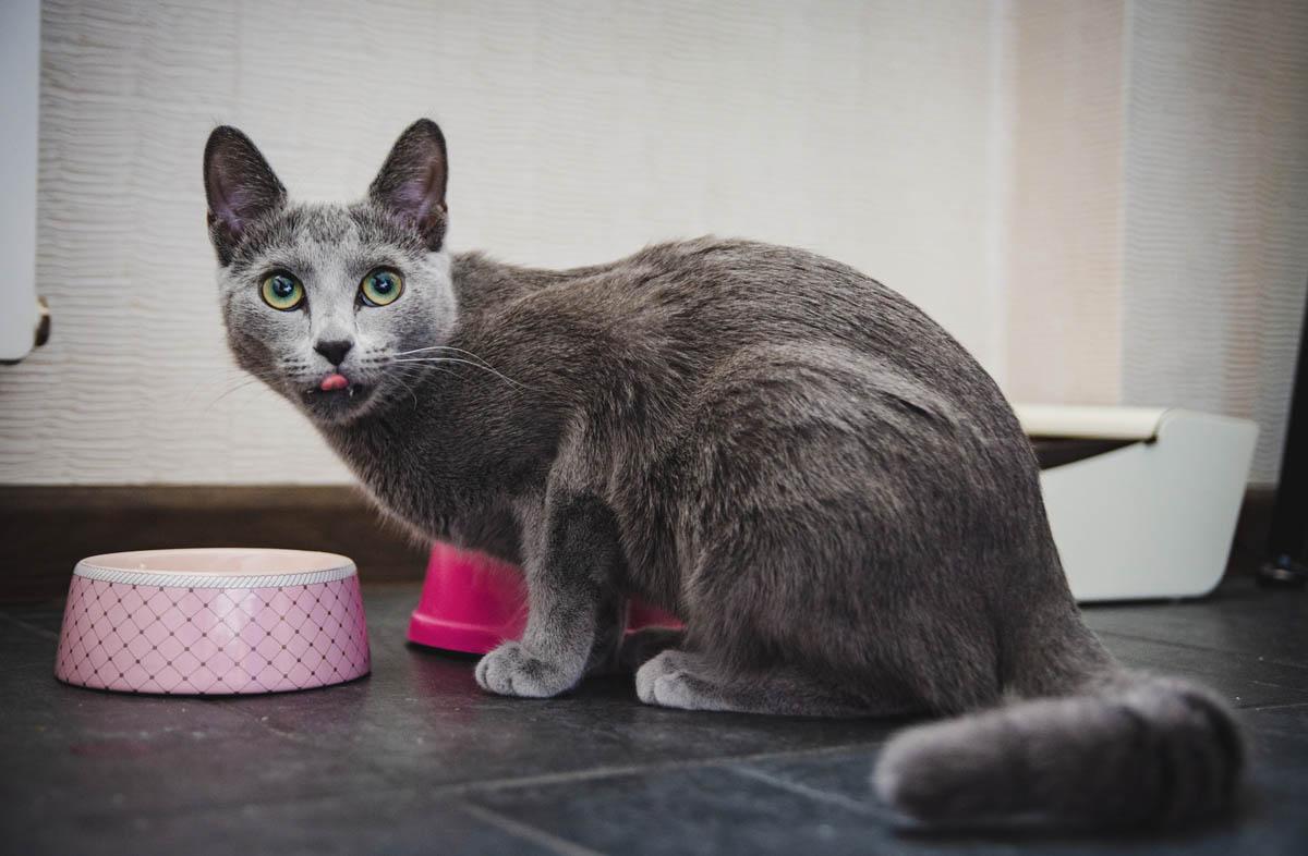 Чем отличается сухой корм для кошек