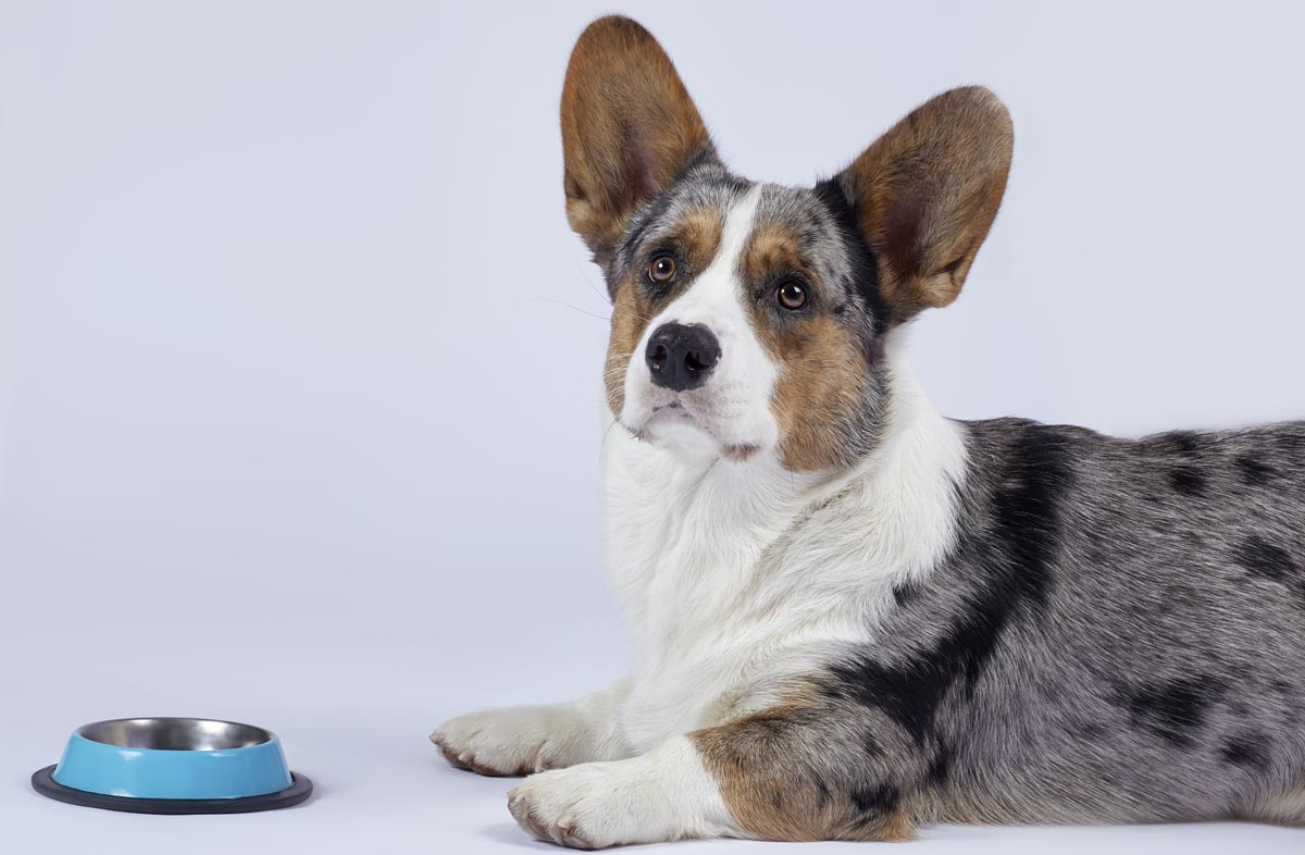 Двухразовое питание собаки
