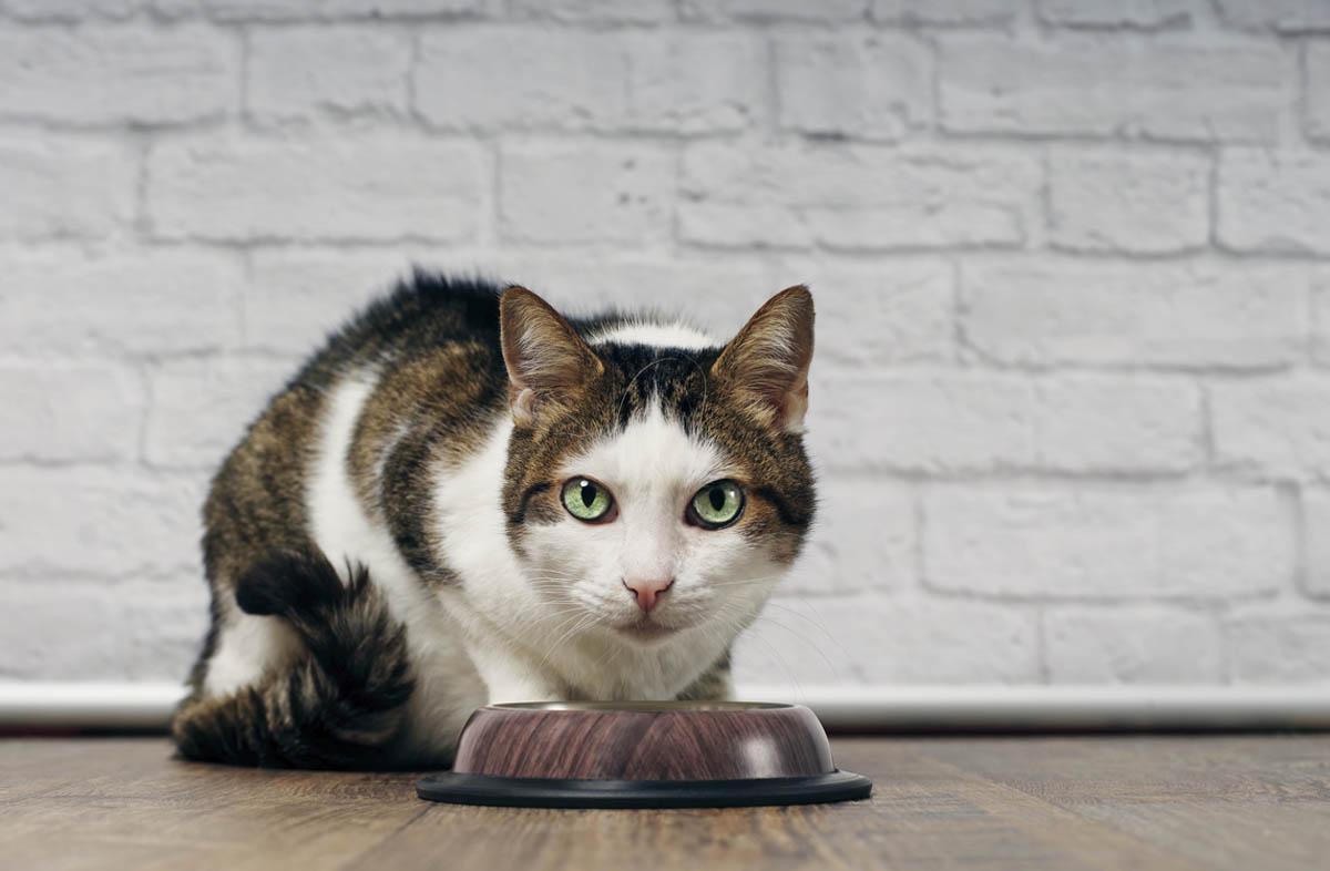 Хороший кошачий сухой корм