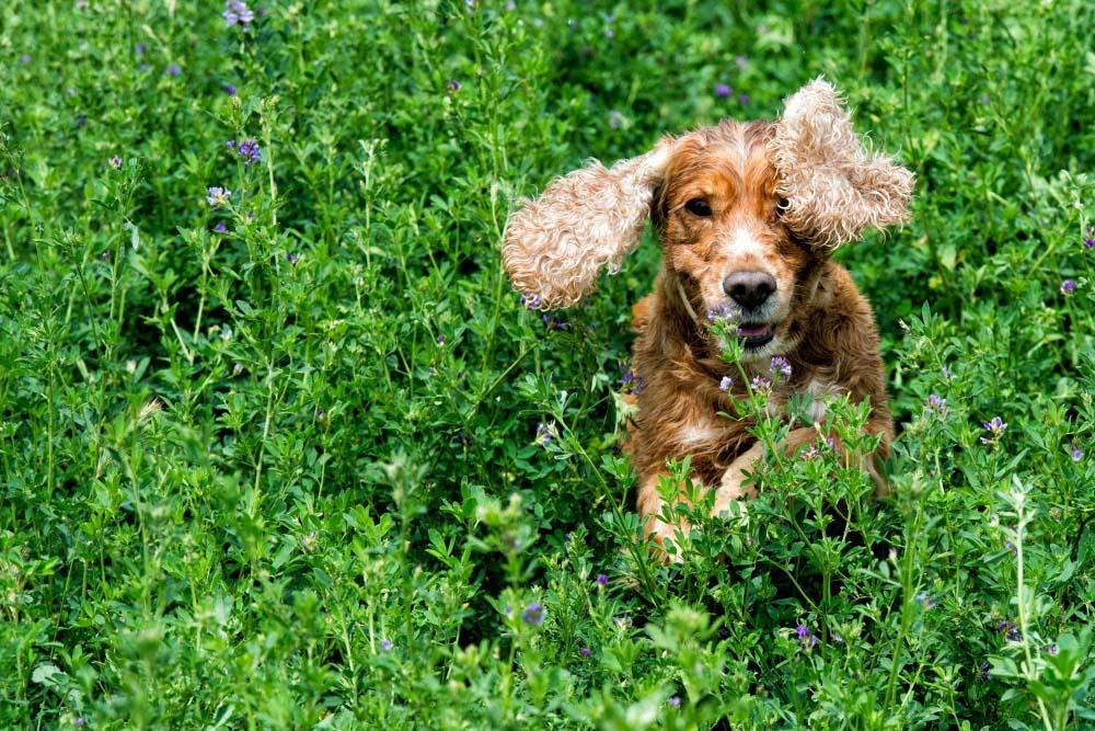 К чему хищнику трава