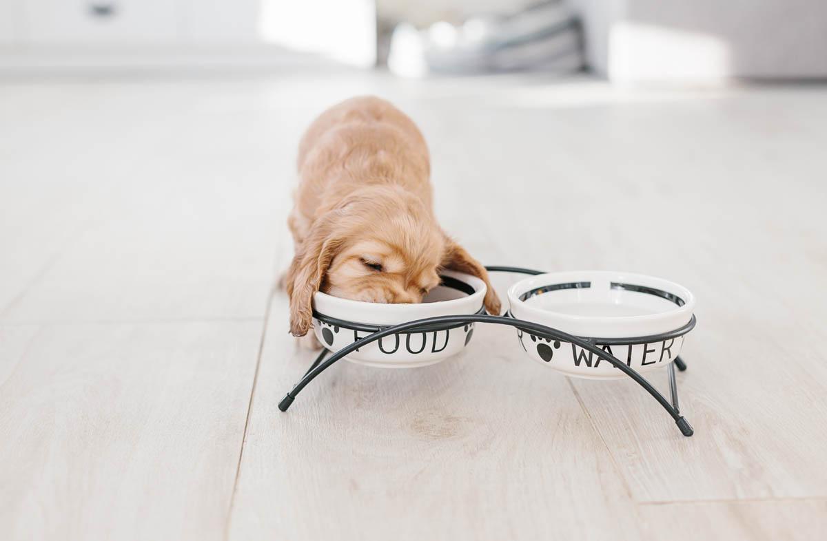 Как переводить щенка на другой сухой корм