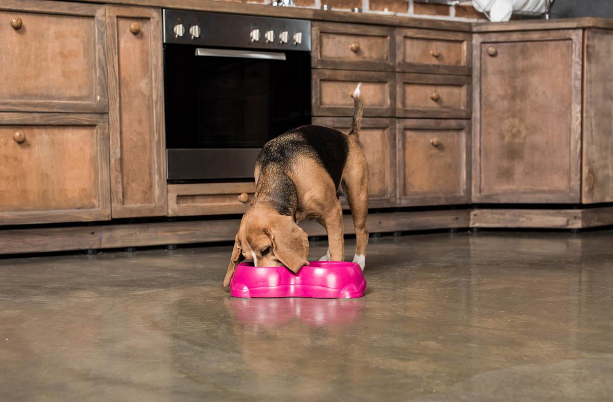 Как правильно кормить собаку сухим кормом