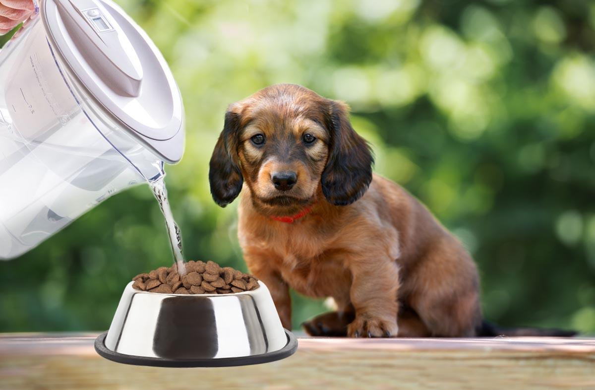 Как правильно размачивать сухой корм для щенков