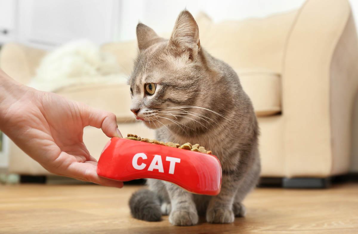 Как приучить кота к сухому корму