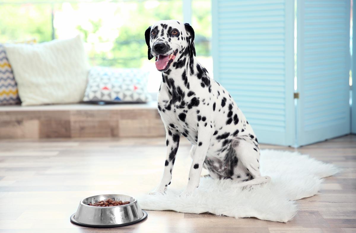 Как рассчитать рацион питания собаки по таблице
