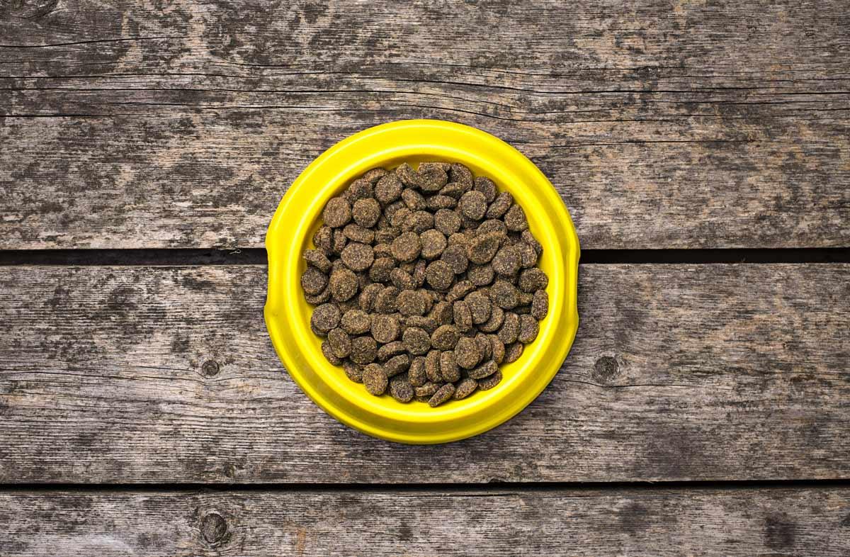 Как выбрать сухой корм для своего питомца