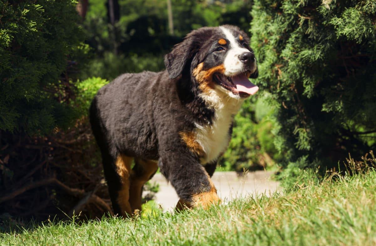 Каким должен быть рацион большой собаки