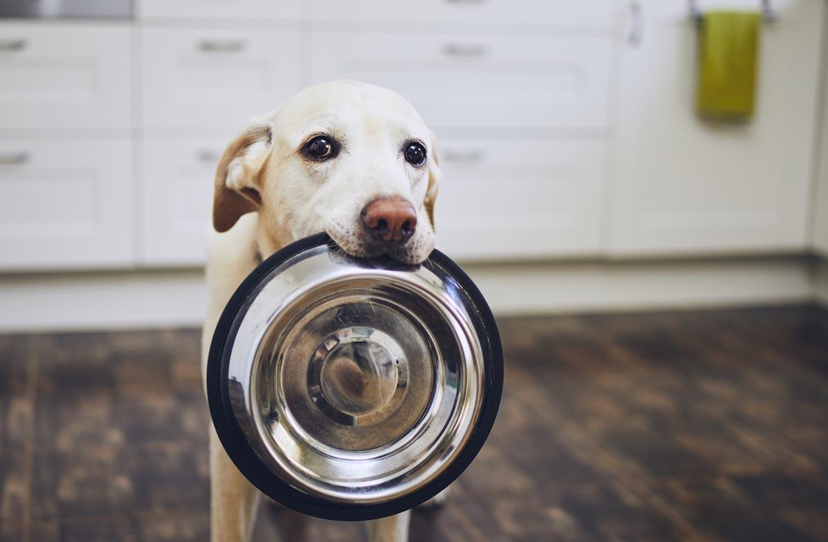 Кормить ли собаку сухим кормом