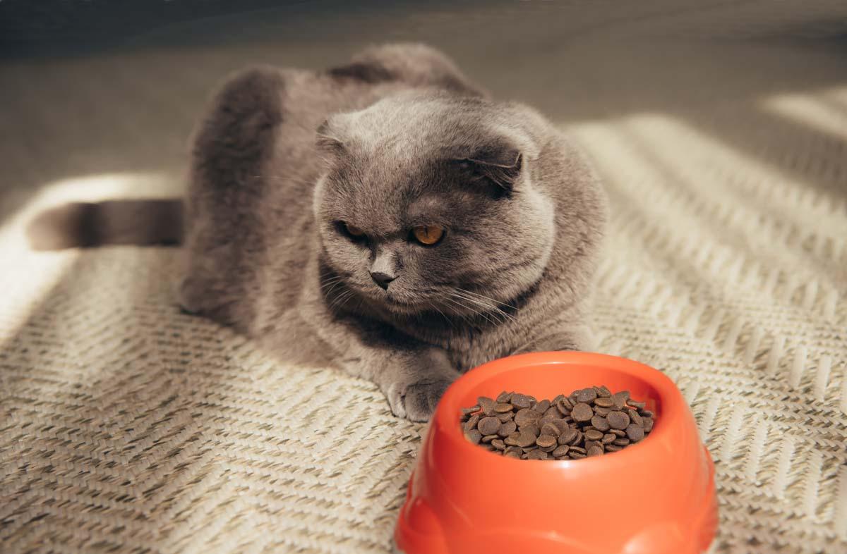 Кот отказывается от сухого корма
