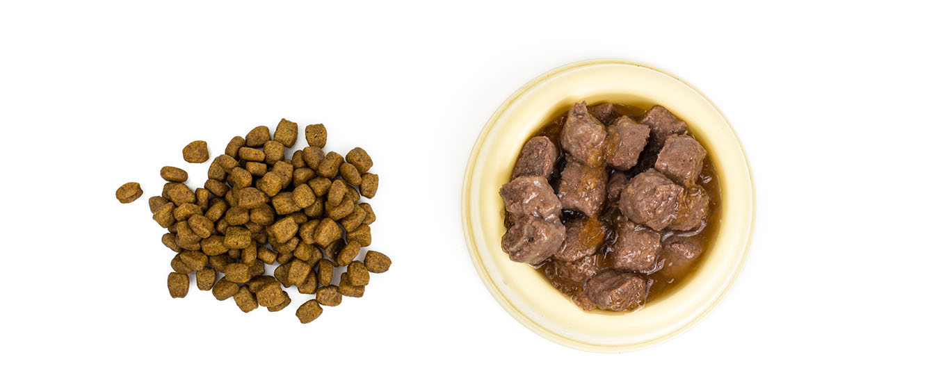 Можно ли кормить кота сухим и влажным кормом