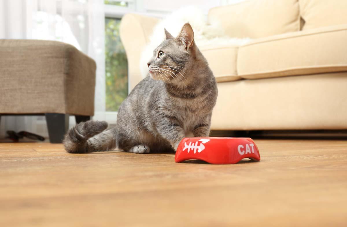 Можно ли давать котам сухой корм