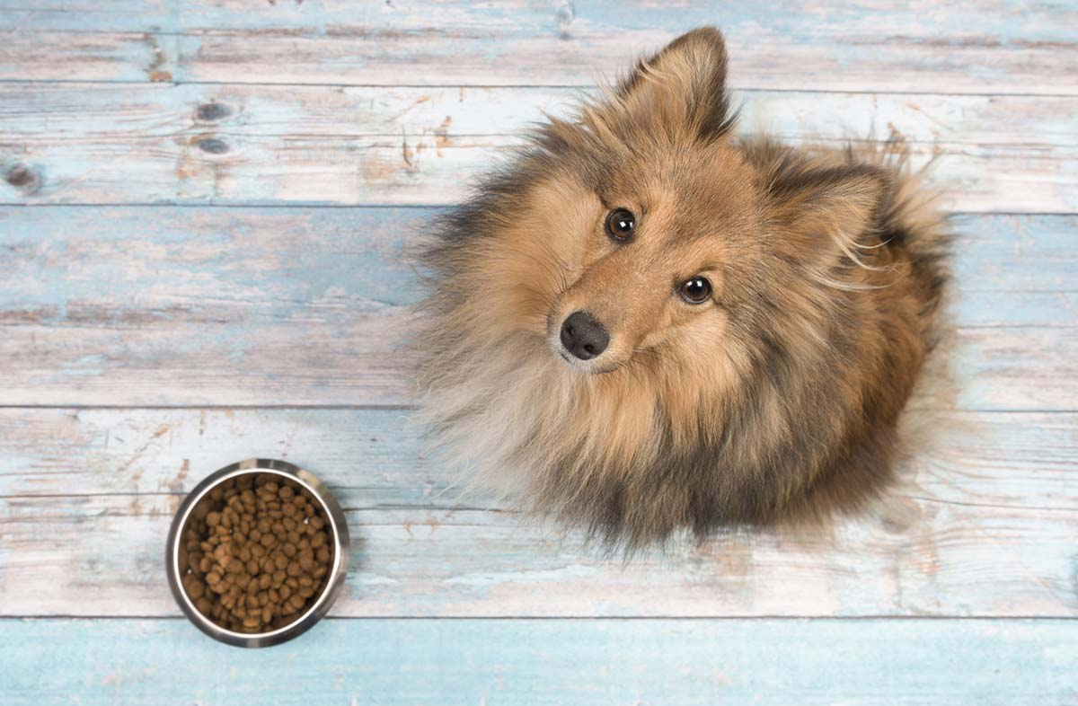 Можно ли давать собакам сухой корм