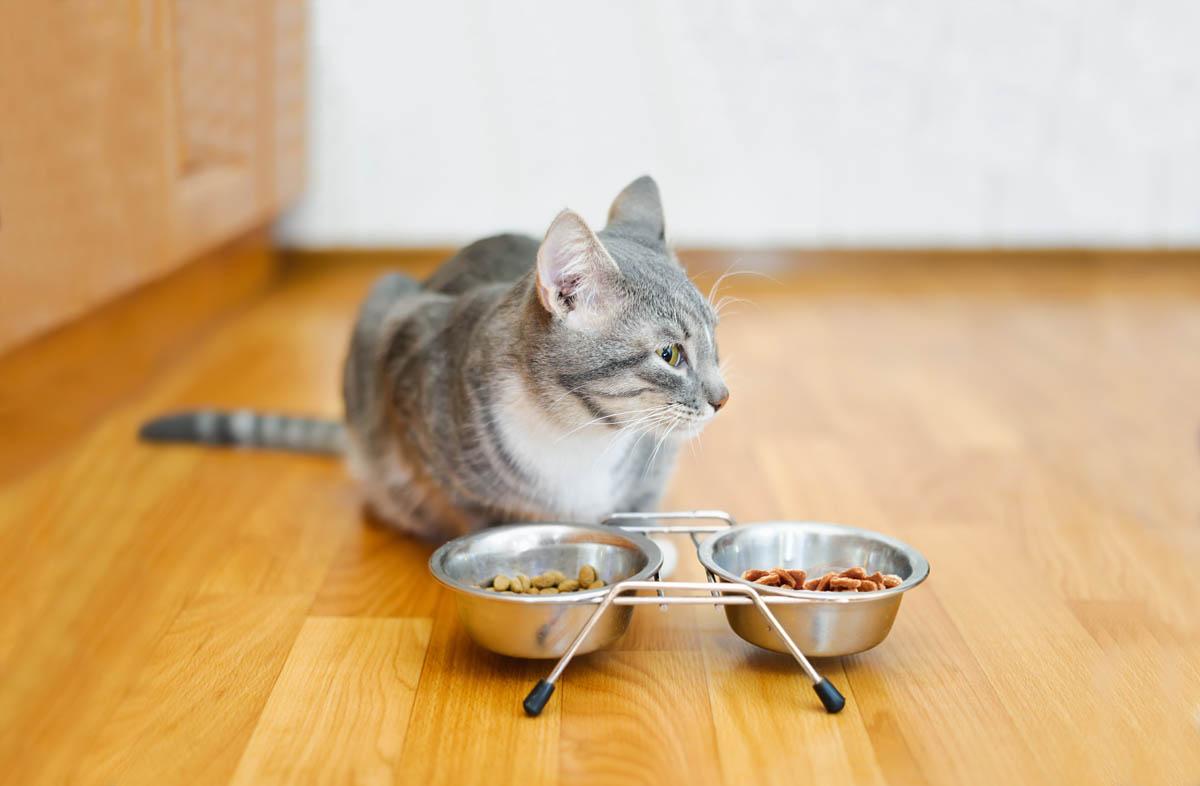 Можно ли кошкам сухой и влажный корм