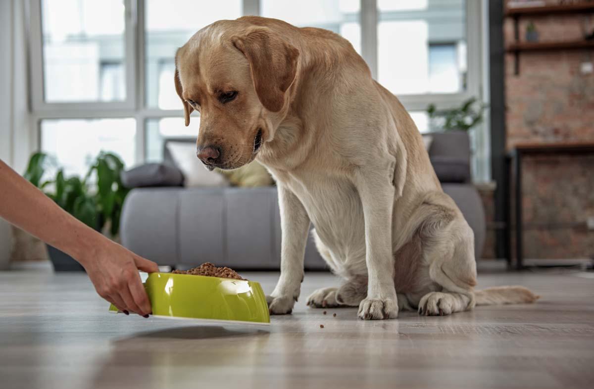 Можно ли смешивать сухой корм для собак