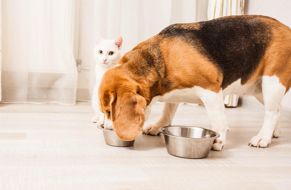 Можно ли собаке кошачий сухой корм