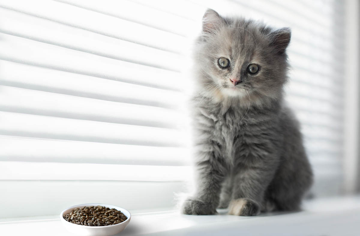 Норма сухого корма для котят