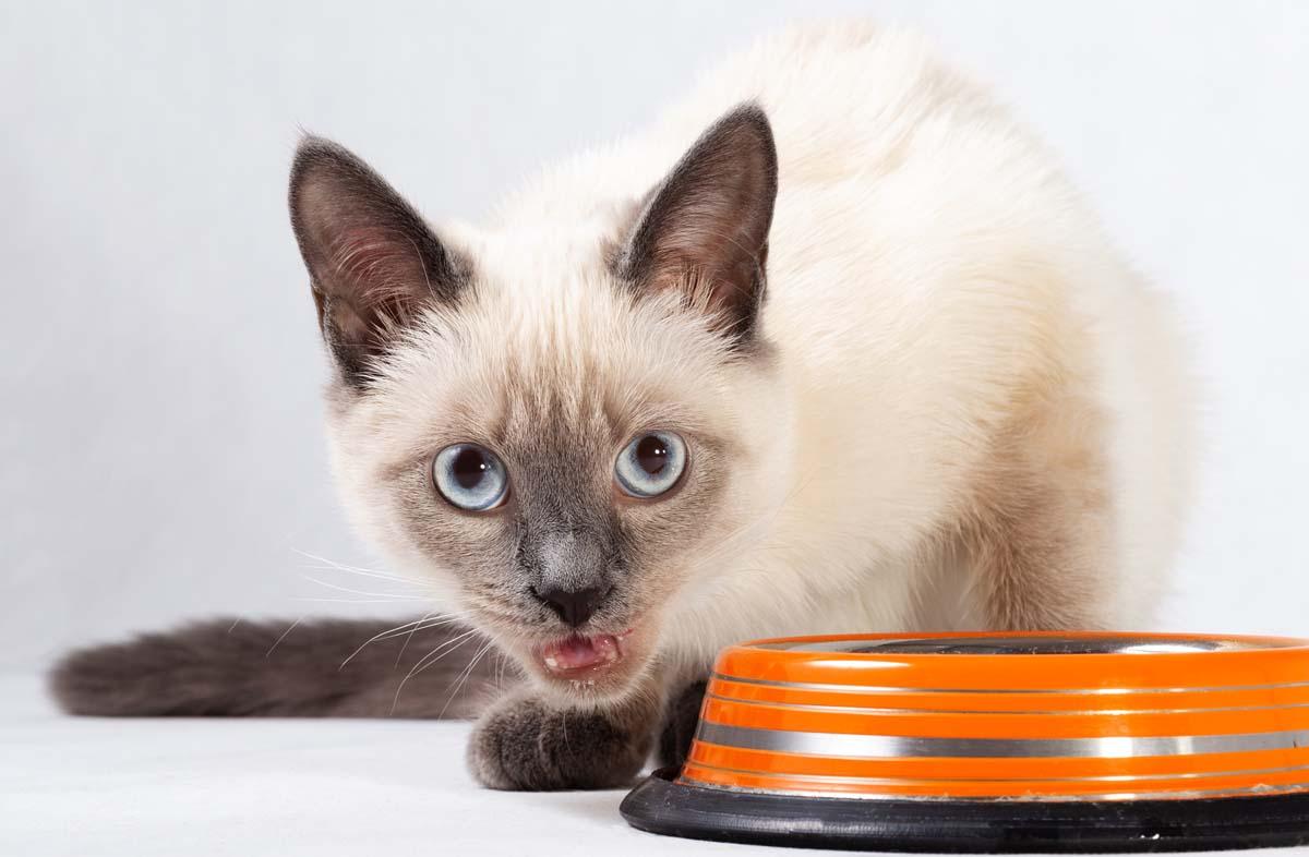 Питание кота сухим кормом