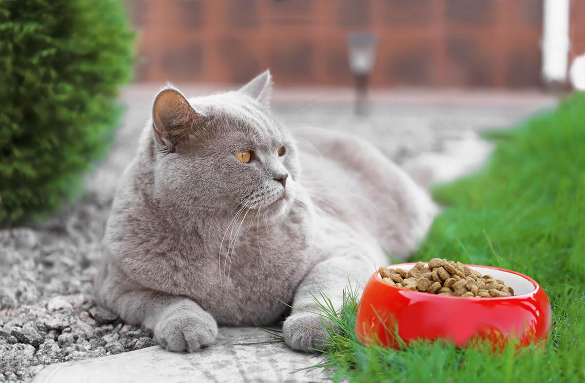 Почему кот не ест сухой корм