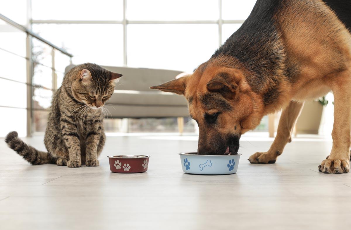 Полезен ли сухой корм домашним животным