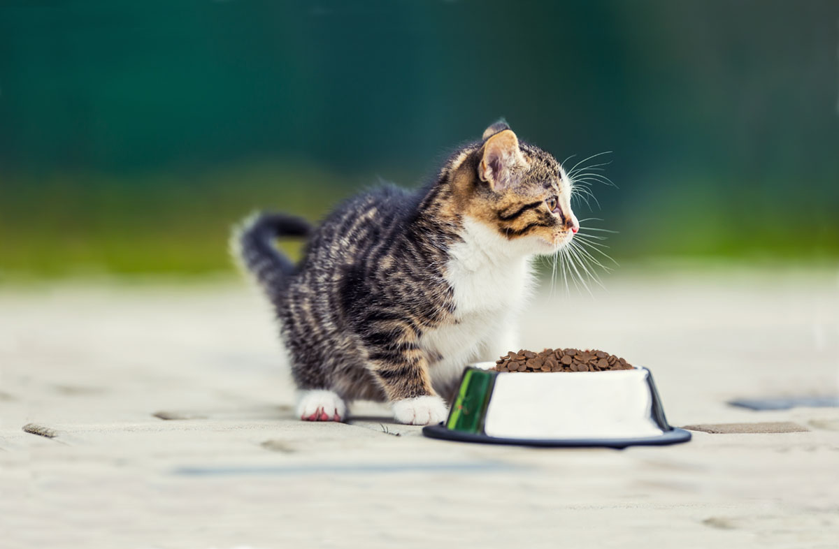 С какого возраста кормить котёнка сухим кормом