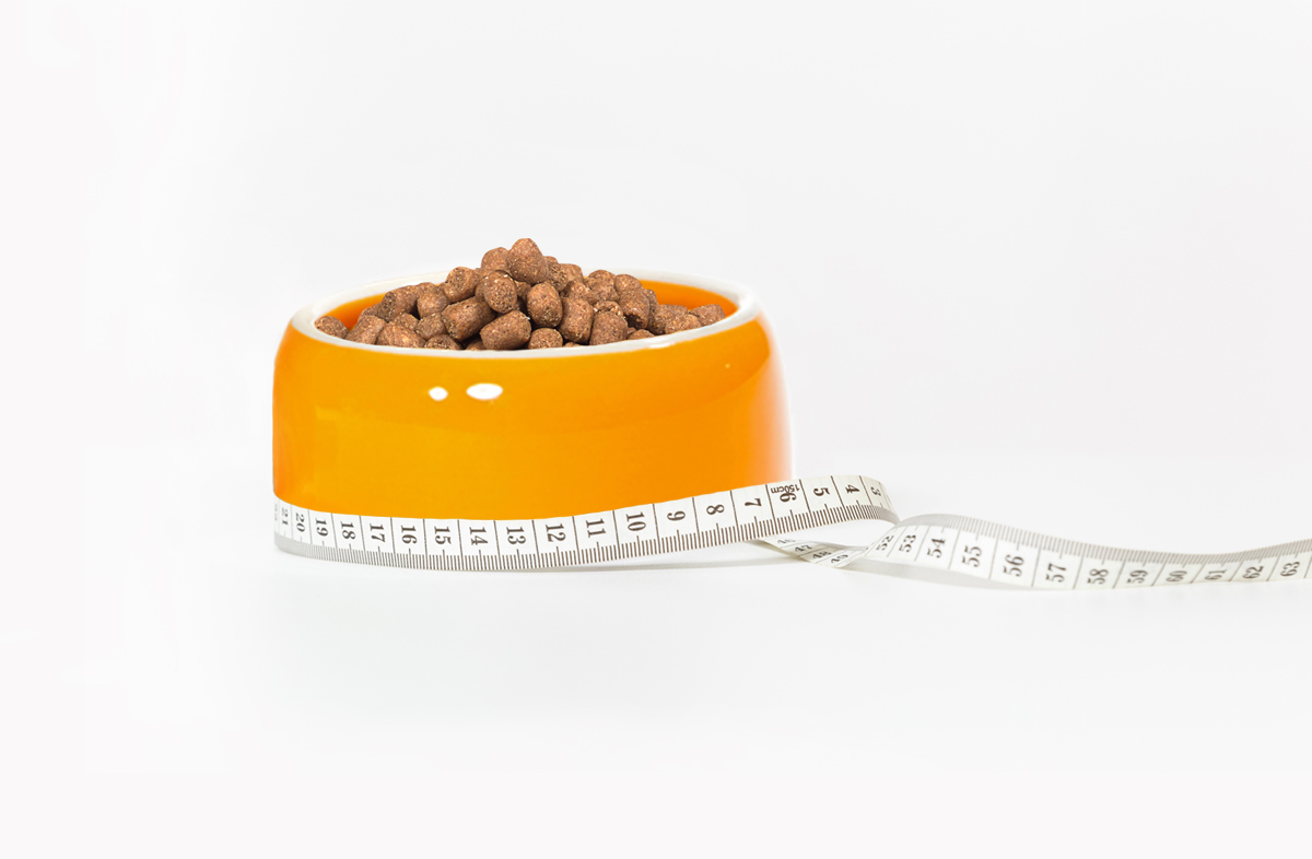 Сколько грамм сухого корма давать питомцу