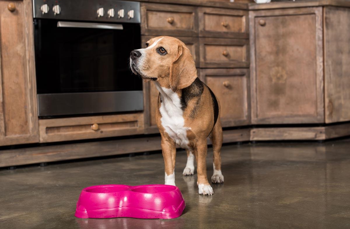 Собака перестала есть сухой корм
