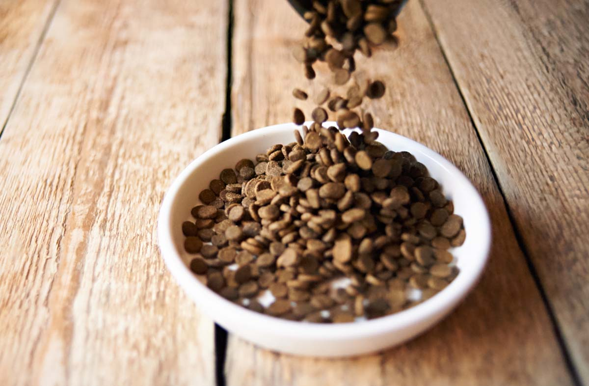 Содержание белка в кормах для собак и кошек
