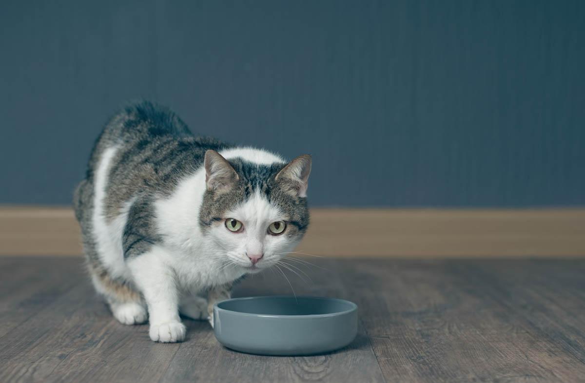 Содержание белка в сухом корме для кошек