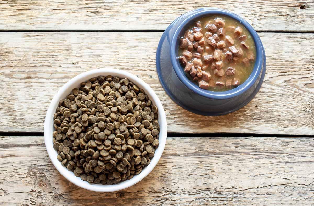 Сухой и влажный корм разных производителей