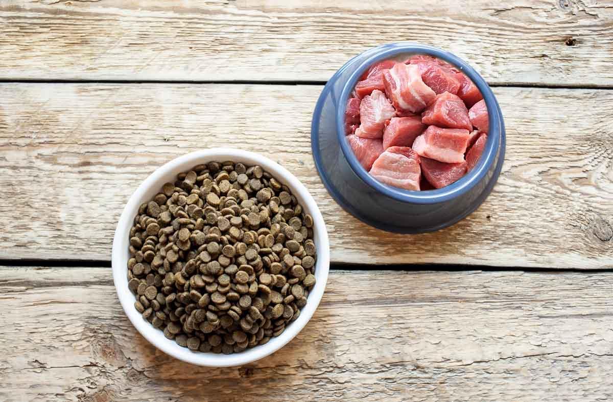 Сухой корм и мясо собакам