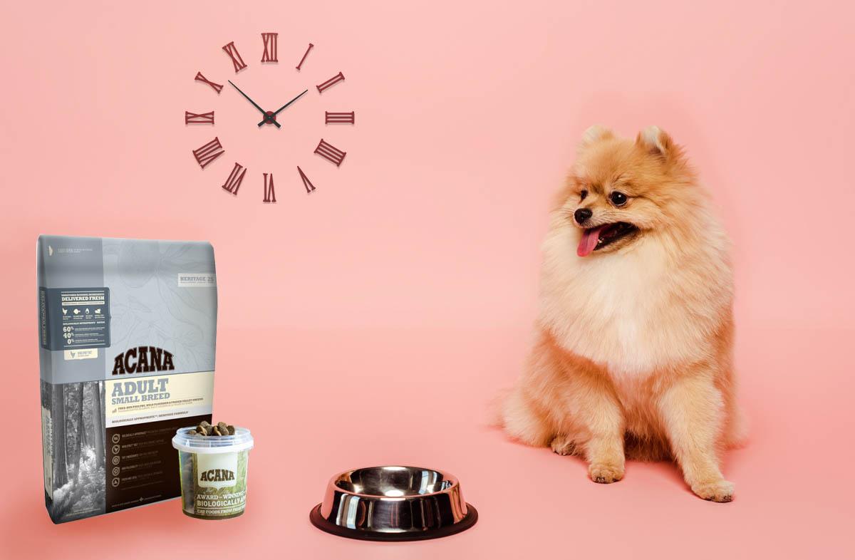 Суточный рацион собаки: нормы кормления