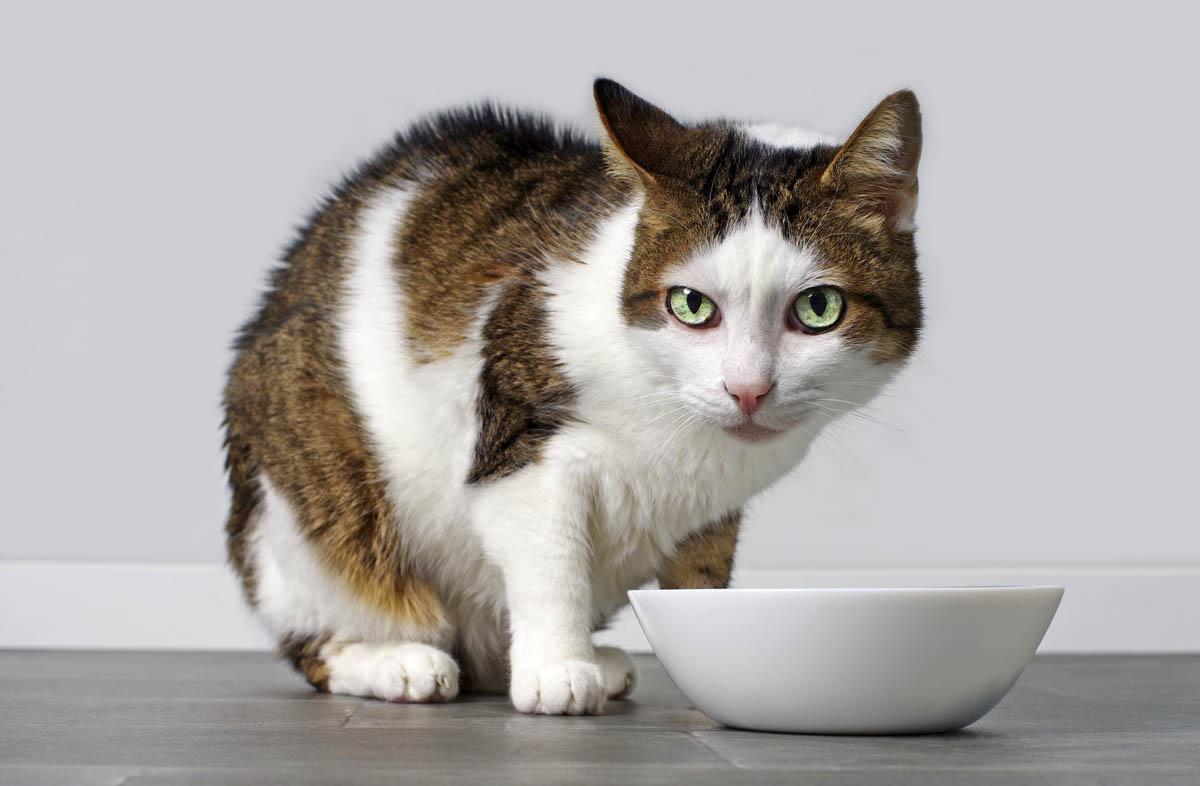 Выпускается ли корм для кошек без белка