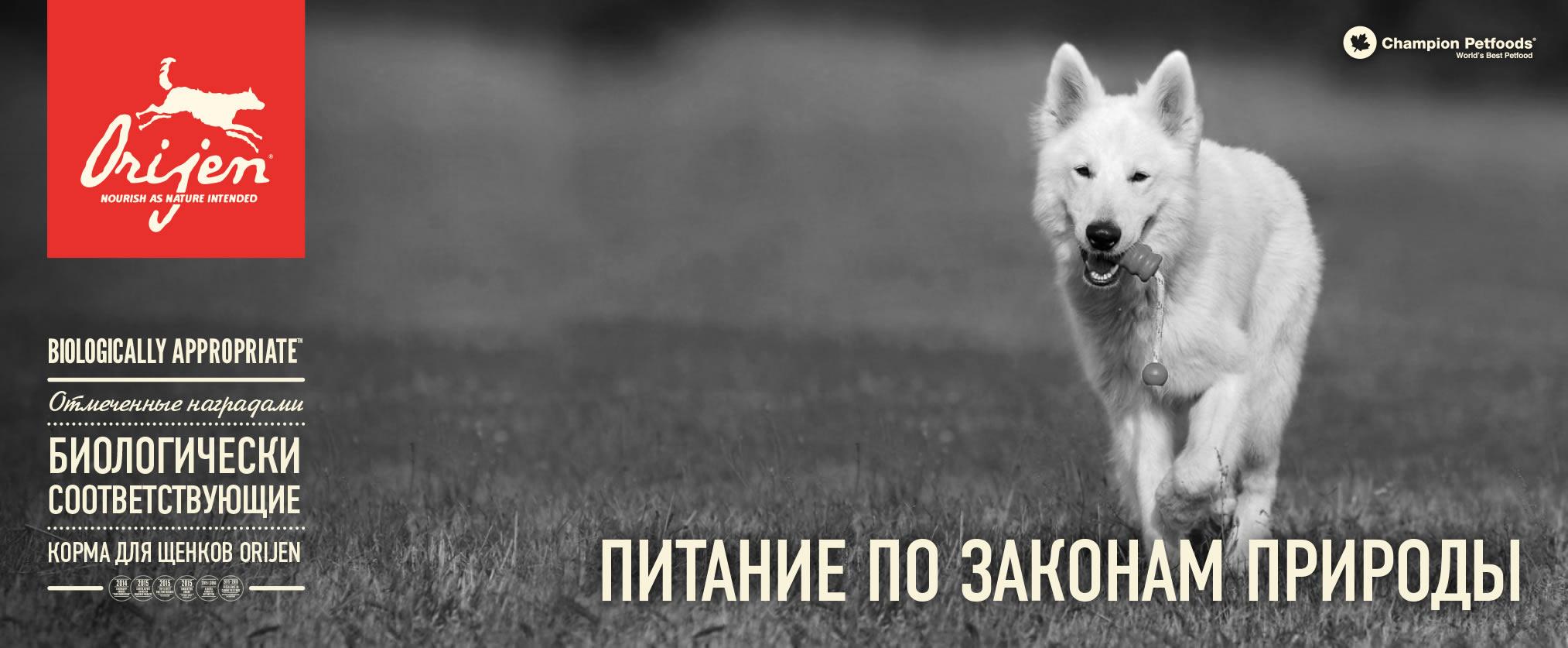 Корм Orijen для щенков