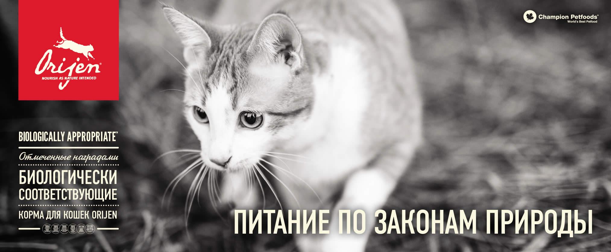 Корм Orijen для кошек и котов