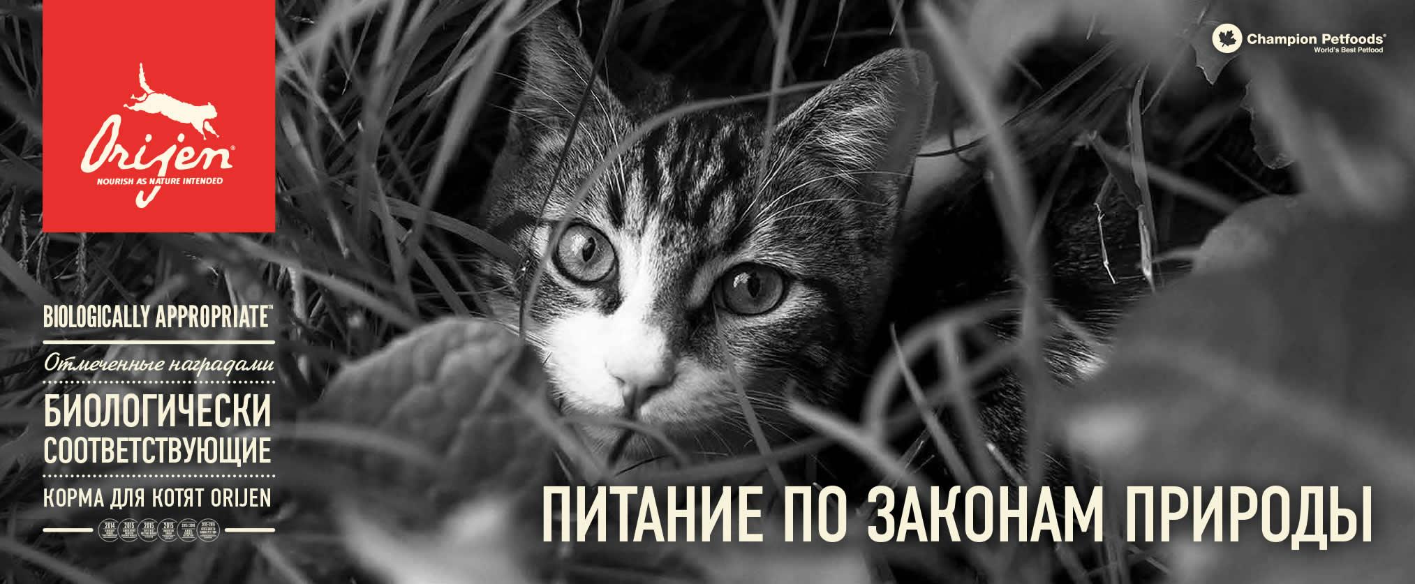 Сухой корм для котят Orijen