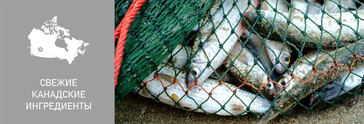 Свежие региональные ингредиенты в кормах Акана
