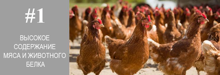 Acana и Orijen высокое содержание мяса и животного белка