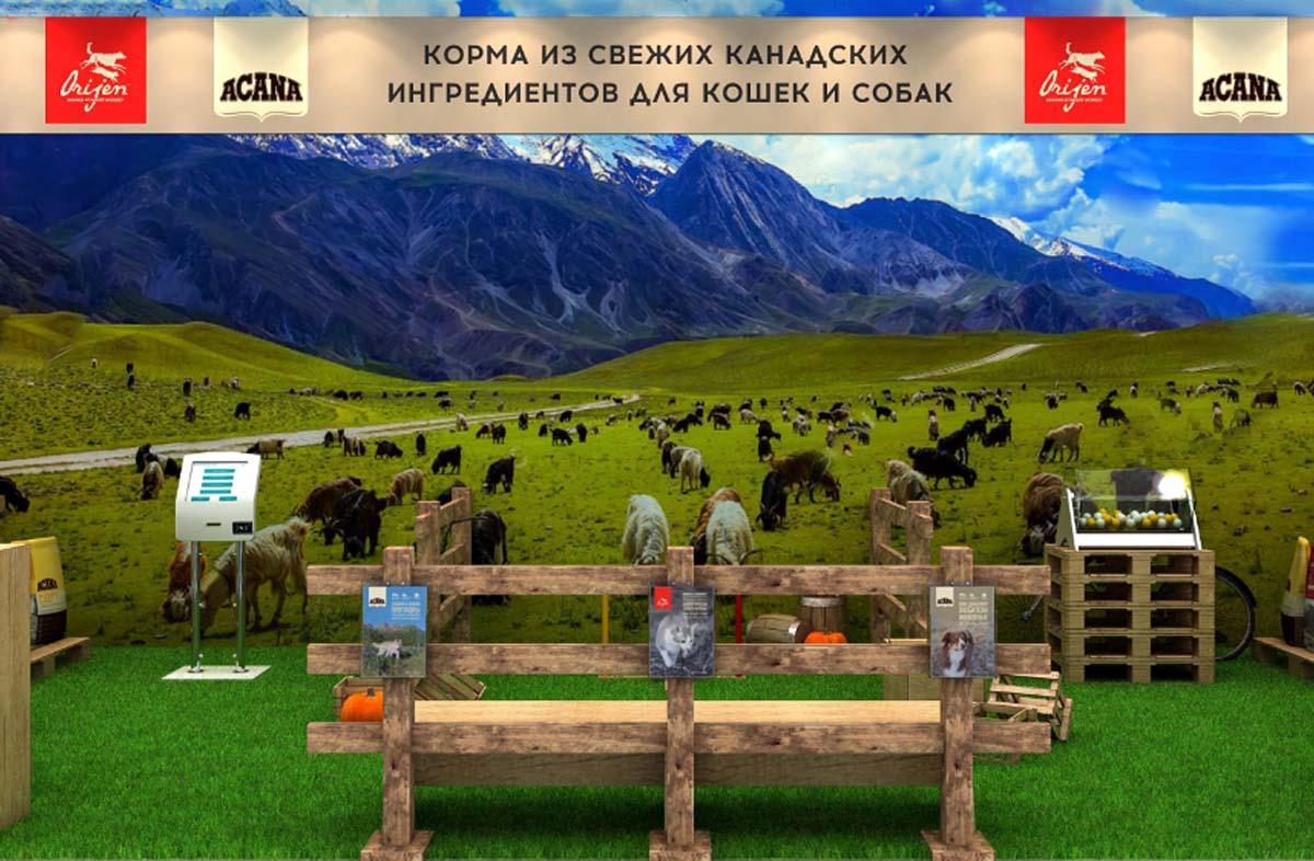 Фестиваль «Четыре лапы» в парке Сокольники