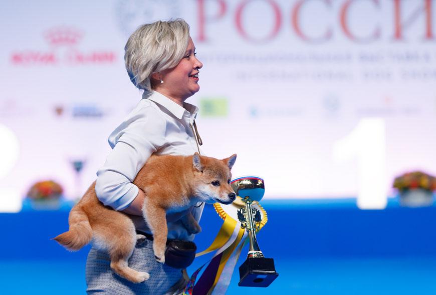 Приглашаем на выставку собак «РОССИЯ 2019»