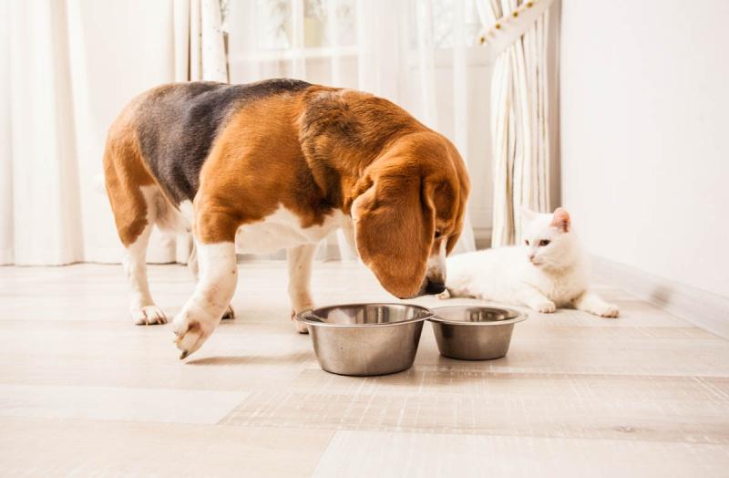 Как перевести на сухой корм собаку или кошку