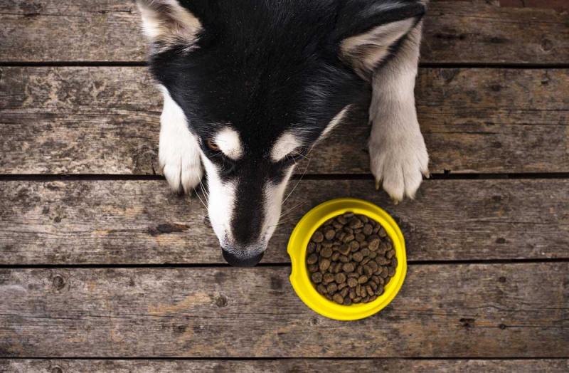 Как правильно перевести собаку на сухой корм