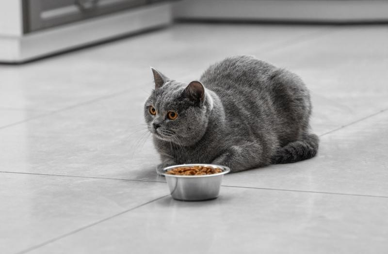 Как выбрать сухой корм для кошки