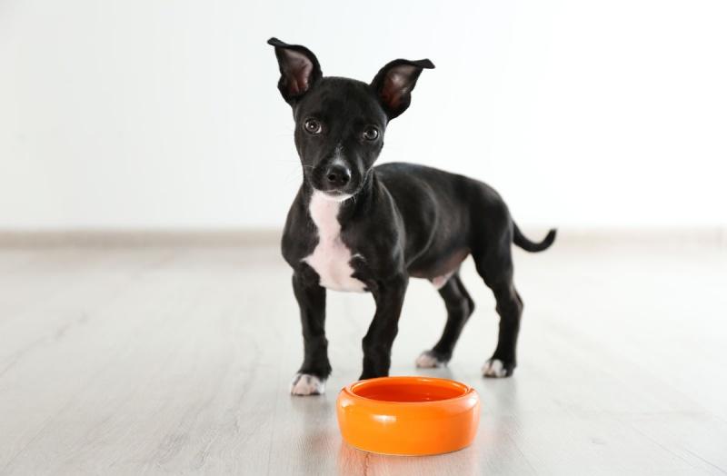 Каким должно быть питание собаки